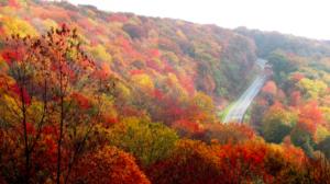fall road - evoto
